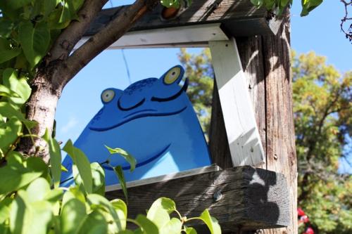 Senor Frog